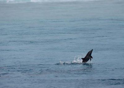 Malediven-Surf-Bilder-13
